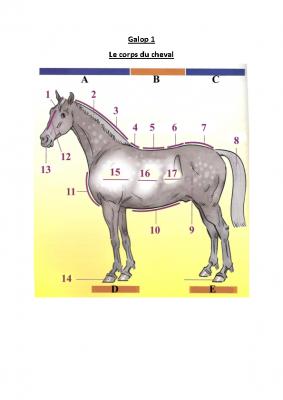 corps du cheval à compléter